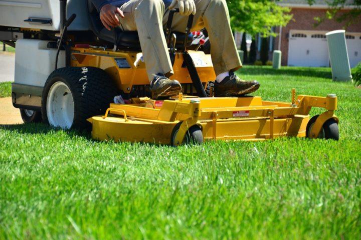 W jaki sposób założyć i zachować gęsty i zdrowy trawnik