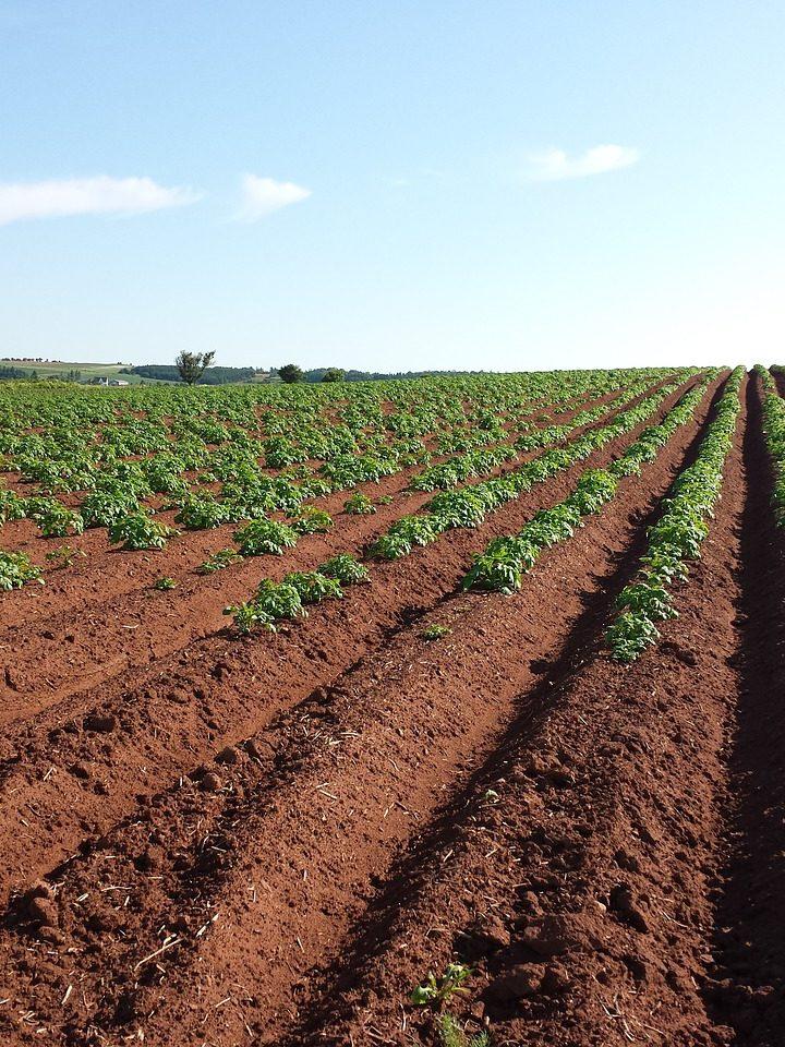 Środki ochrony roślin w uprawach rzepaku