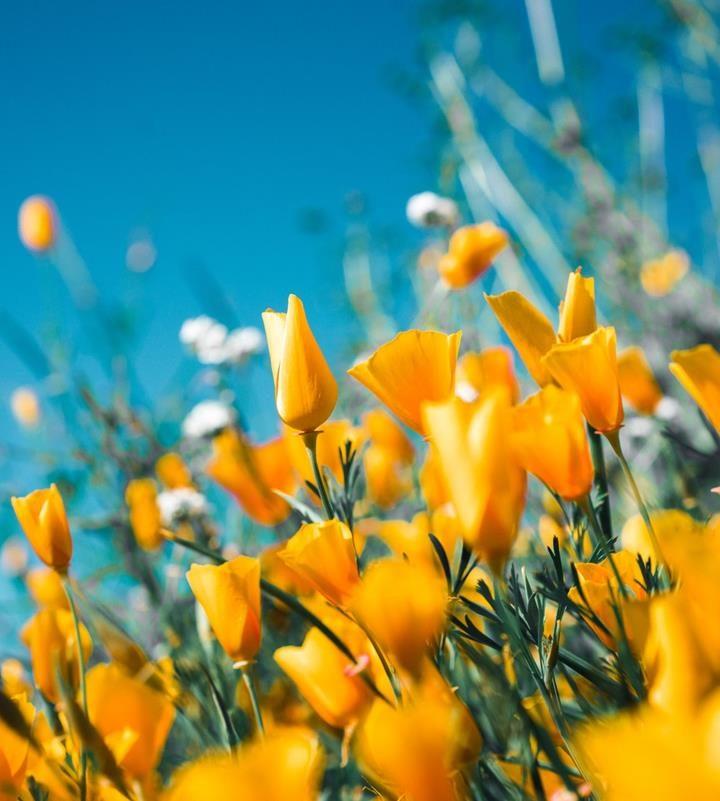 Trwałe kwiaty sztuczne