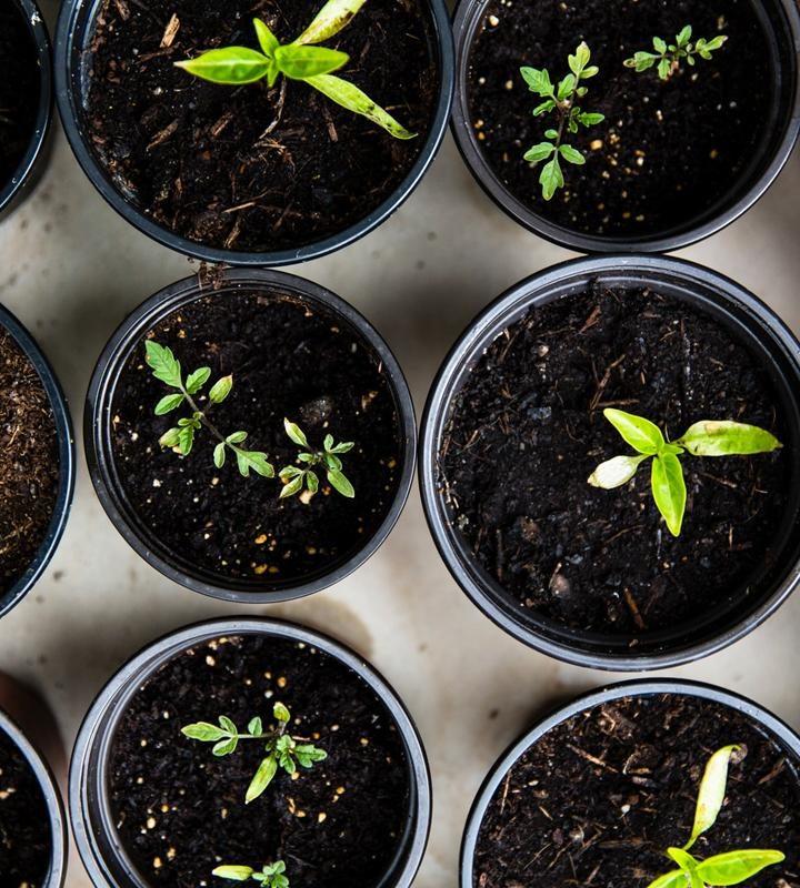 Odpowiednie środki ochrony roślin