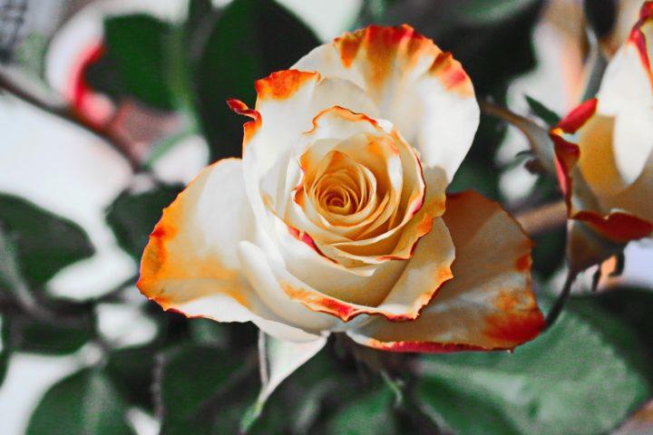 Sztuczne kwiaty mogą stanowić piękną dekorację